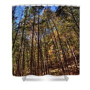 Pocono Trees Shower Curtain