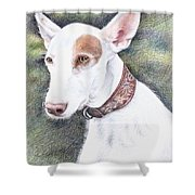 Podenco Ibicenco Shower Curtain