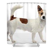 Podengo Portuguese Dog Shower Curtain