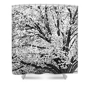 Poetry Tree Shower Curtain