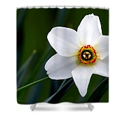 Poet's Daffodil Shower Curtain