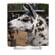 Polka Dot Llama Pogo Rules Shower Curtain