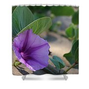 Pohuehue - Pua Nani O Kamaole Hawaii - Beach Morning Glory Shower Curtain