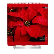 Poinsettia # 2 Shower Curtain