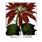 Poinsettia A Traditional Christmas Plant Vintage Poster Shower Curtain