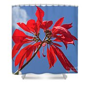 poinsettia from Madagascar Shower Curtain