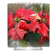 Poinsettia In Red And White Shower Curtain