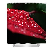 Poinsettia Leaf With Water Droplets Shower Curtain