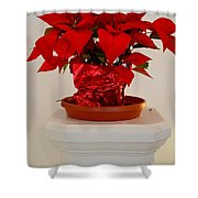 Poinsettia On A Pedestal No 1 Shower Curtain