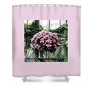 Poinsettia Tree Longwood Gardens Shower Curtain