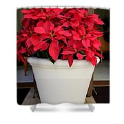 Poinsettias In A Planter Shower Curtain