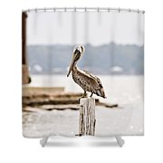 Point Clear Shower Curtain