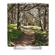 Point Lobos Cypress Path Shower Curtain