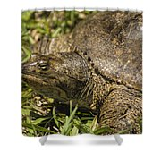 Pointed Nose Florida Softshell Turtle - Apalone Ferox Shower Curtain