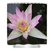 Pointed Pink Lily Shower Curtain