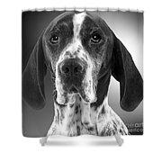 Pointer Dog Shower Curtain