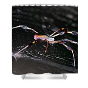 Points Of Contact - Spider - Orb Weaver Shower Curtain