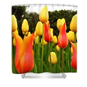 Pointy Tulips Shower Curtain