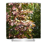 Poisin Oak Shower Curtain