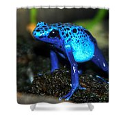 Poison Blue Dart Frog Shower Curtain