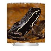 Poison Dart Frog Portrait Amazonian Shower Curtain
