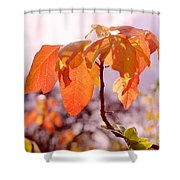Poison Ivy Beauty Shower Curtain