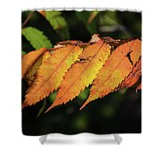 Poison Sumac Golden Kickoff To Fall Colors Shower Curtain