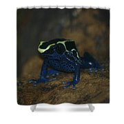 Poisonous Frog 02 Shower Curtain