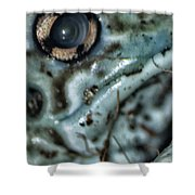 Poisonous Frog Eye Shower Curtain