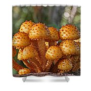 Poisonous Looking Mushrooms Shower Curtain