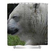 Polar Bear 4 Shower Curtain