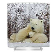 Polar Bear And 3 Month Old Cubs Shower Curtain