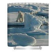 Polar Bear And Cub Shower Curtain