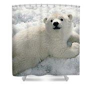 Polar Bear Cub Playing In Snow Alaska Shower Curtain