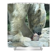 Polar Bear Feeding Shower Curtain