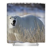 Polar Bear In The Sunshinechurchill Shower Curtain