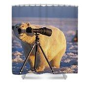 Polar Bear Investigating Photographers Shower Curtain