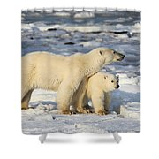 Polar Bear Mother And Cub Shower Curtain