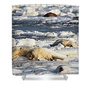 Polar Bear Mother And Cub Grooming Shower Curtain