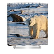 Polar Bear On The Tundra Shower Curtain