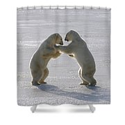 Polar Bear Pair Sparring Churchill Shower Curtain