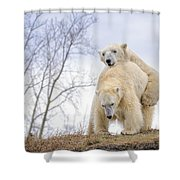 Polar Bear Spring Fling Shower Curtain