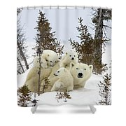 Polar Bear Ursus Maritimus Mother And Cubs Shower Curtain