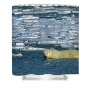Polar Bear Wading Along Ice Floe Shower Curtain