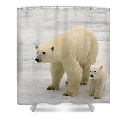 Polar Bear With Cub Shower Curtain