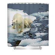 Polar Bear With Cubs On Pack Ice Shower Curtain