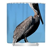 Pole With Pelican  Shower Curtain