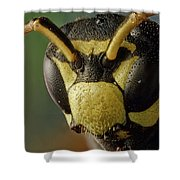 Polistes Dominula 41 Shower Curtain