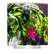Polka Dot Easter Cactus Shower Curtain