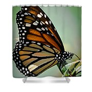 Polka Dots And Wings Shower Curtain